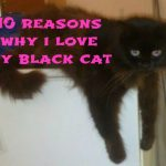 10 Reasons Why I Love My Black Cat